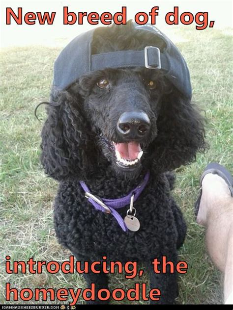 New breed of dog - I Has A Hotdog - Dog Pictures - Funny